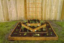 Veggies gardens