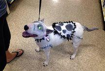 Hunde udklædning/ Dogs dress up