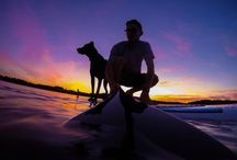 Dogs Paddle Boarding