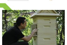 Rumah Lebah