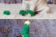 Amusing animals