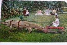 Rit / Croc ride