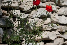 poppies poppies everywhere everyday make my day in every way ♥