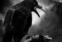 Corbeau rieur