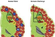 Immunology / immunology, immune system, antibody