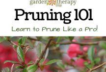 Gardening / Gardening tips.
