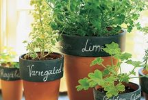 City Gardening / Urban gardening for small spaces and apartment living. / by Jennifer Walker