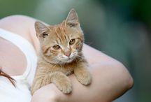 Cats&Dogs/HornyakAdriennPhotography / #animals #cat #dog