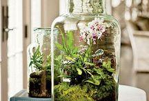 plantas / terrarios/arranjos/jardinagem
