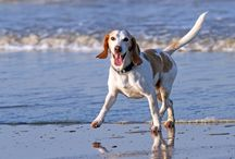 The Importance of Pets / The important role pets play in human lives. Answers here!