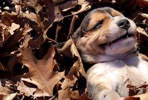 honden / Lieve en leuke honden