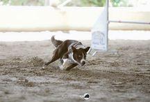 Fabio Montisci / In Dog we trust