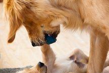 Cuccioli di cani