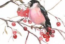 Birds.Bullfinch