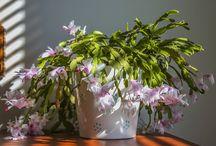 Plantes d' interieur