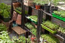 Eigen tuin - zaaien/stekken / Alles wat te maken heeft met zaaien en nieuwe plantjes maken