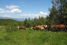 Our Ranches in Southern BC