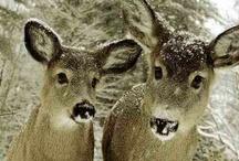 rein og hjort