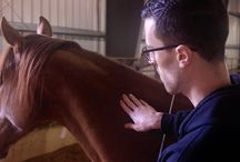 Equine Therapy / Equine Therapy