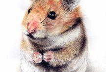Hamster erizos mas