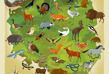 geografia zwierząt