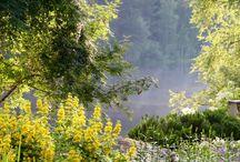 My cottage garden / my cottage garden, mökkipuutarhani