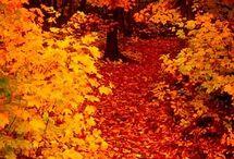 Fall pretty
