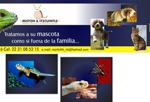 clinicas veterinarias / hospital,laboratorio,cirugía, estética para mascotas