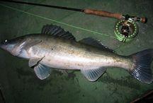 FISH SAND-EEL-ZUBAC