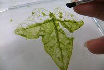 Artesanato -Folhas fantasmas