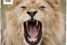 #SaveSelous / Zu Tausenden werden die Elefanten im Selous gejagt - mit Helikoptern und Kalaschnikows. Doch die Wilderei-Krise ist nur eine von mehreren Gefahren für das Unesco-Weltnaturerbe im Herzen Tansanias. Geplante Erdöl- und Erdgasförderungen, Uranminen und ein Staudammprojekt drohen das Naturparadies für immer zu zerstören. Das müssen wir unbedingt verhindern! Bitte hilf uns, das Weltnaturerbe zu retten. Unterschreib die Petition. www.wwf.de/selous-retten