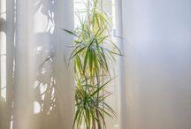 Designer Tips: Window Treatments