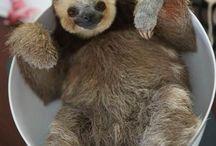 sloths and stuff