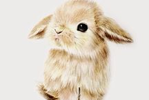 Кролики,зайчики
