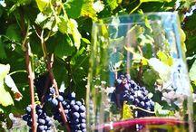 Vinhos nacionais...Casa Verrone / Vinhos de inverno, vinhos do Brasil,o melhor vinho da Mantiqueira,Casa Verrone...Serra da Mantiqueira wineyard