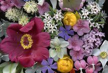 flowers/plants / by Norbert Wendel