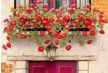 Door windows flowers