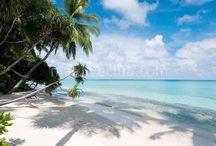 Kuramathi / Muthiş doğası ve resifleriyle ünlü bu ada ve etrafında dalış için çok uygun resifler vardır. 3 ayrı alanda toplanmış bu Maldiv otelinin her noktasında ayrı tatlar tadabilirsiniz. Bu arada Villa fiyatı tam pansiyon olarak gelmektedir buda bir avantaj olarak değerlendirilebilir. Tesis hakkında daha detaylı bilgi için; http://www.maldiveclub.com/maldivler-otelleri/kuramathi