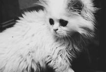Animals / Pets ♡♡♡♡