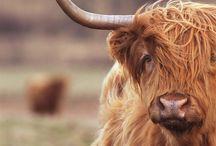 Scottish Animals & Wildlife