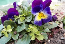 In my garden.....