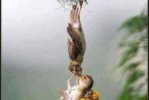 vtáča