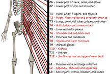 Nerve Referral