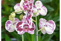 Florăria PLANT POINT din Iaşi / Florăria Plant Point din Iaşi.  Plant Point - comercializare şi închiriere plante decorative.