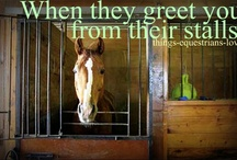 Inspiration when building stables/riding halls