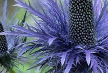 *Green & Flowers* 育てたい &気になる植物