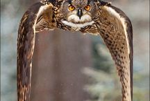Nature Photography Owl
