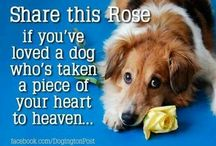 share this rose