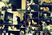 2014 KOCIA SESJA W STUDIO RSF- WRZESIEŃ 2014 / wrzesień 2014