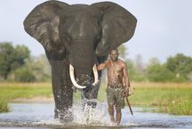 African Animals / Animals from our beloved Africa